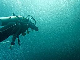 Tauchen im Sardinenschwarm, Pescador Island