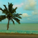 Palme und Meer, Corozal, Belize